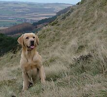 obedient gundog 2 by weecoughimages