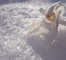 beauty dying in the cold cold snow by sija