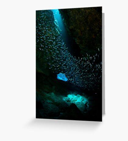 Fish swirl Greeting Card