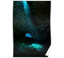 Fish swirl Poster