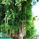 Banyan Tree in East Bali by Michael Brewer