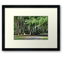 Palms, pines... Paradise!!! Framed Print