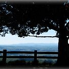 Tree with a View - Tablelands Nth Qld by Giovanna Devlin