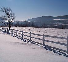 Winter Pastures by Dandelion Dilluvio