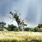 """Then The Rain Came- Kalahari Desert Botswana' by Bruce Jones"