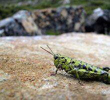 Green Grasshopper by Robert Jenner