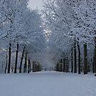Winter wonderland by Lindie Allen