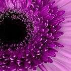 Deep within Purple by liaimages