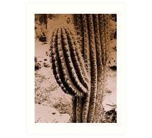 High & Dry Desert Flower Art Print