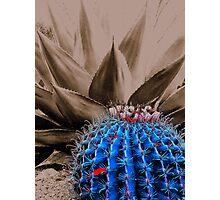 Desert Flower Two Plus Tone Photographic Print