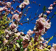 Flowers and Sky by Steven Maynard