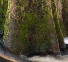 Cypress Tree Sticker