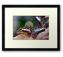 Butterfly Gossip Framed Print