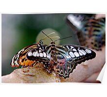 Butterfly Gossip Poster