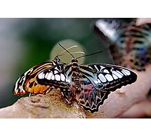 Butterfly Gossip Photographic Print