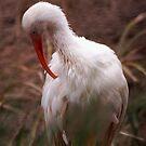 Bird by loiteke
