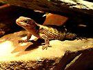Little Lizard by Veronica Schultz
