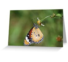 Lesser Monarch Greeting Card