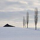 Three'n half Trees by Rosy Kueng
