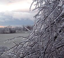 Ice storm on the farm by Holsteiner
