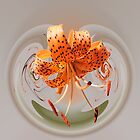 Tiger Lily by Phoxford