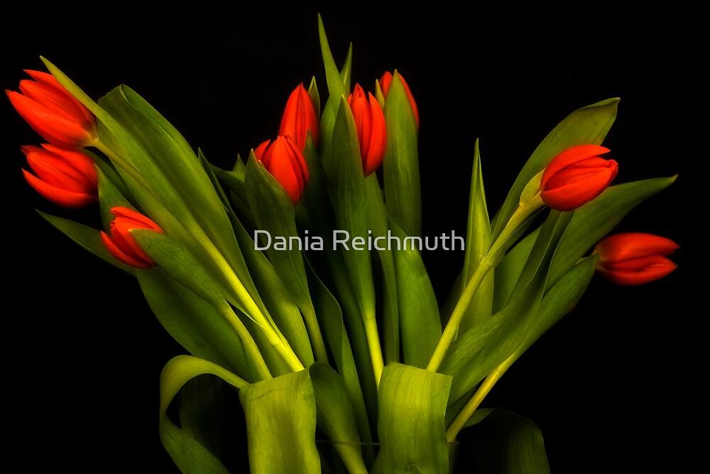 Tulips  by Dania Reichmuth