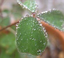 Yam Leaf  by largo