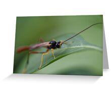 Two-toned Caterpillar Parasite Wasp Greeting Card