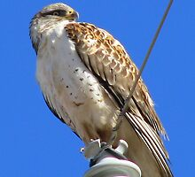 What are you looking at by Sherry Pundt