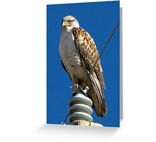 Ferruginous ~ Pale Adult Greeting Card