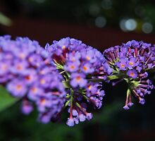 Purple Flowers by JessicaHaley