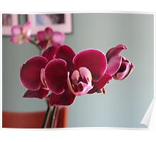 Burgundy Orchid Poster