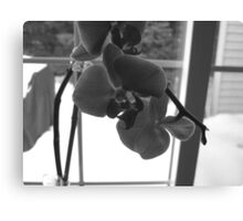 black&white orchid Canvas Print