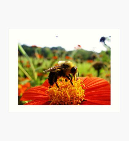 Bee and Flower- Longfellow Garden, Minnesota Art Print