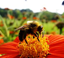 Bee and Flower- Longfellow Garden, Minnesota by shutterbug2010