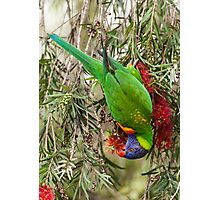 Rainbow Lorikeet 2 Photographic Print