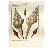 Neues systematisches Conchylien-Cabinet - 249 Poster