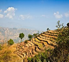 Terraced Hills - Nepal by David Lewins