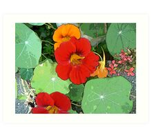 Colours of the Garden Bed Art Print