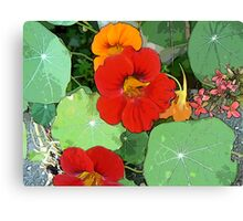 Colours of the Garden Bed Canvas Print