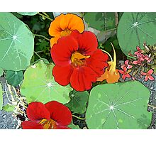 Colours of the Garden Bed Photographic Print