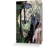 """""""Mine is most certainly longer than yours"""" -  Or The Tale of Two Tails! Greeting Card"""