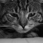 The Grumpy Cat by netties001