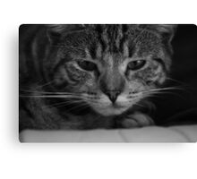 The Grumpy Cat Canvas Print