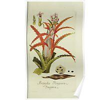 Plantarum Indigenarum et Exoticarum - Lukas Hochenleitter und Kompagnie 1788 - 016 - Bromelia Pinguin or Penguin Poster