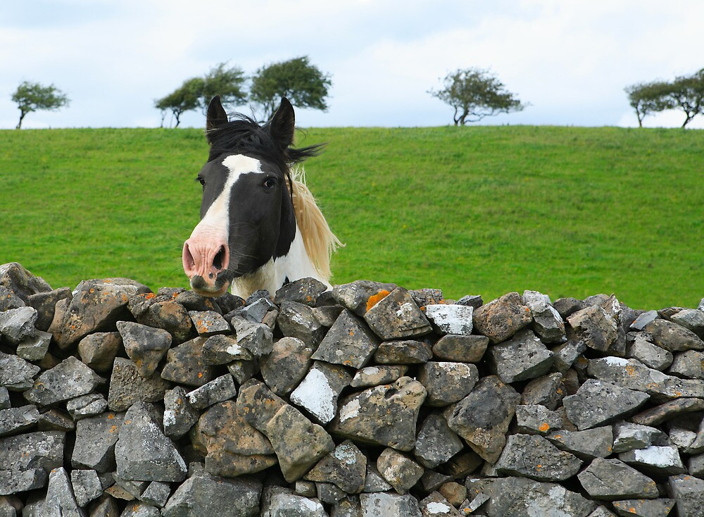 Horse and wall. Ireland by EUNAN SWEENEY