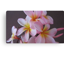 Pink & Yellow Frangipanis. Canvas Print