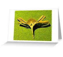 Calendula cross section Greeting Card