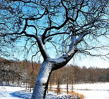 The blue snow tree by jchanders