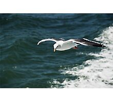 Seagull over San Francisco Bay Photographic Print